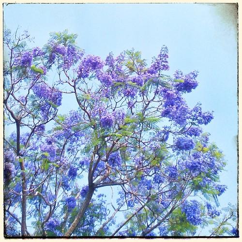 Feeling Purple. #taiwan #nantou #snapseed