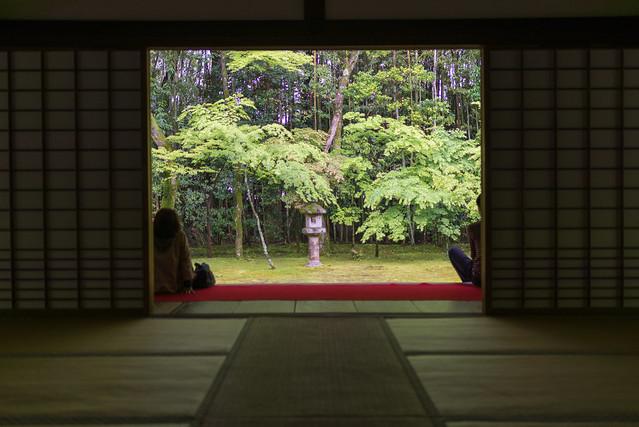 大徳寺 高桐院 楓の庭