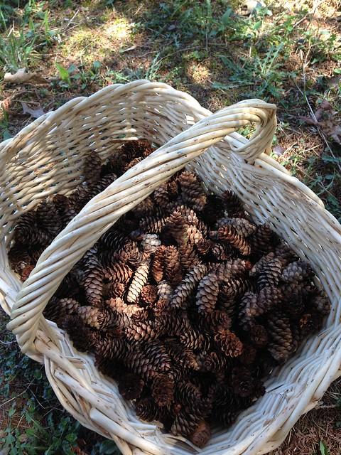 Little pinecones