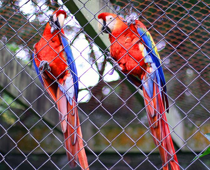10-look do dia no zoologica santur balneario camboriu