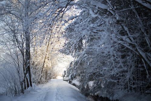 wood winter light sun snow sunrise canon germany bayern 50mm dawn path chiemsee prien 6d canonef50mmf14usm
