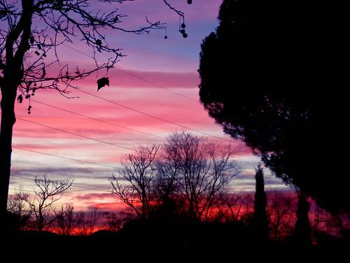 sky silhouette clouds landscape atardecer árboles paisaje colores cielo nubes árbol silueta nwn leganés polvoranca