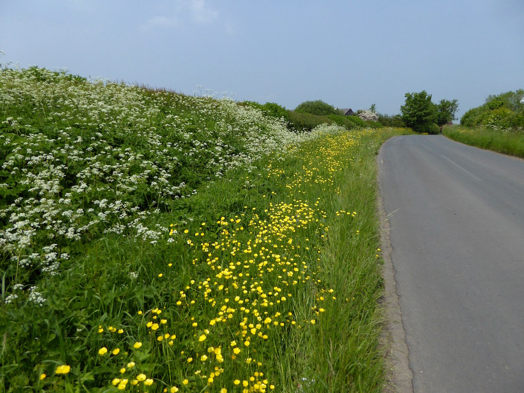Roadside in late May Thame Circular walk