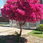 Árvore mais linda na que já vi!