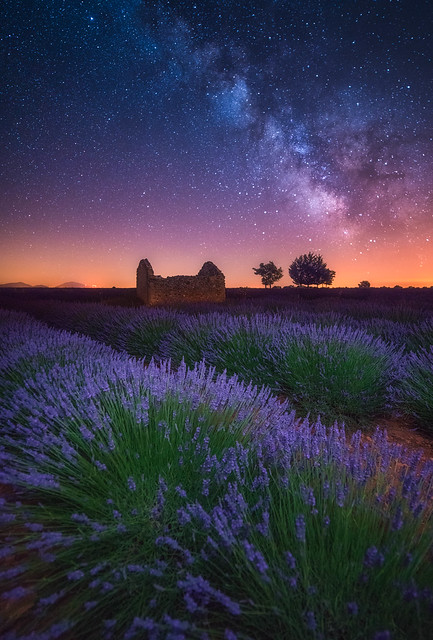 A Lavender Night