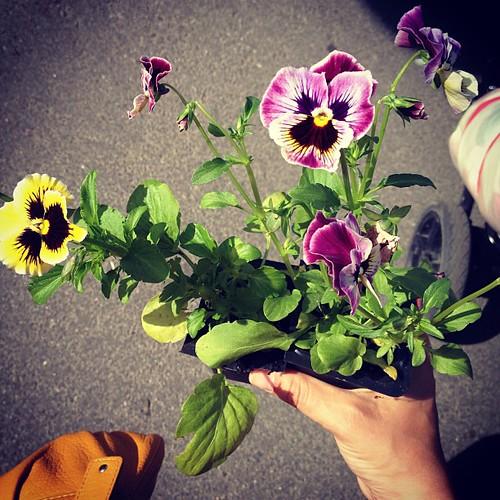 Лето! Сегодня были на пикнике Упсала-цирка, я сажала цветочки, Женя с Настей валялись на траве, а вокруг было много музыки, солнца и ветра, детей и радости!
