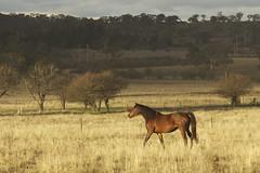 Horse sun