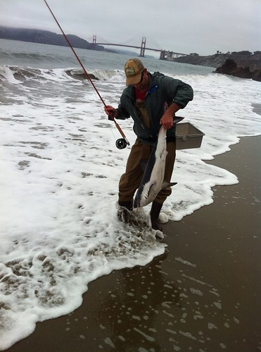 Shark found at China Beach in San Francisco