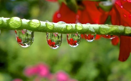 Raindrops . . . . . . . . EXPLORE ... # ..273 .. 08 / 09 / 2013.