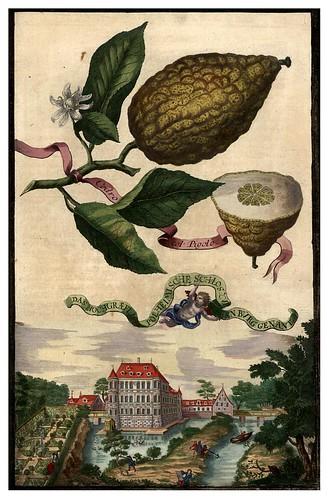 009-Nürnbergische Hesperides-1708-1714- Universitäts- und Landesbibliothek Sachsen-Anhalt