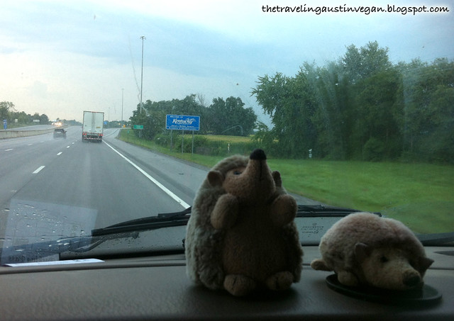 Hedgehogs In Kentucky