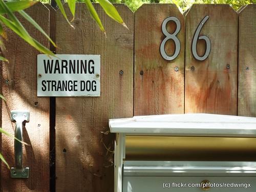 Vulcan_strangedog