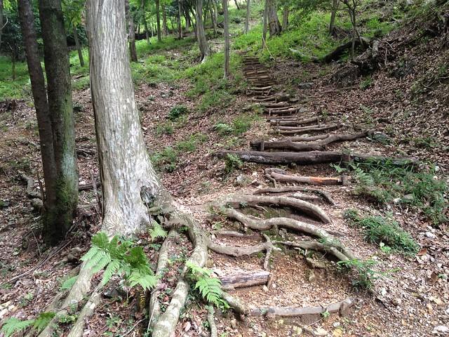 滝谷山 滝まわりコース 木の根階段