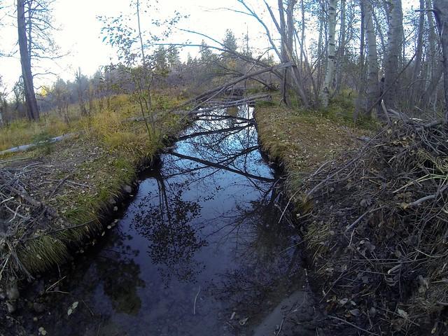 Taylor's Creek - 23