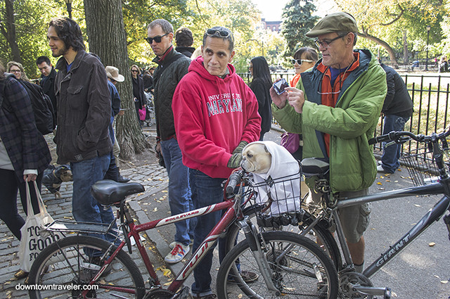 Halloween Dog Costume_ET Man and Bike_Meli the French Bulldog
