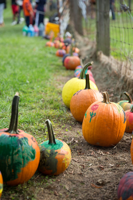 Fox Chase Farm Fall Fesitval