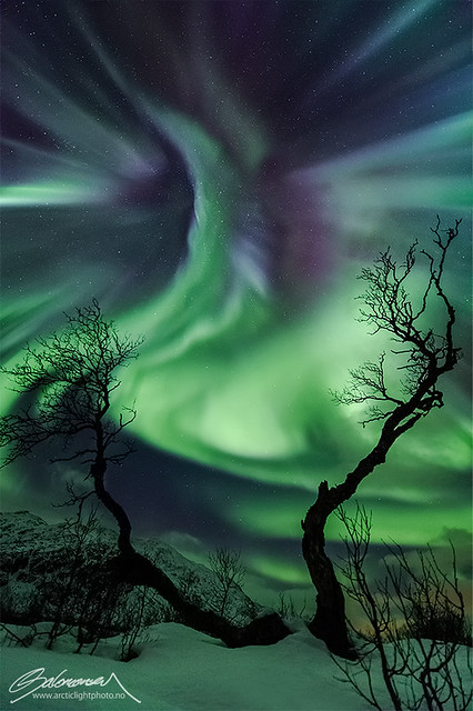 Auroras in Kattfjordeidet, Tromsø, Norway by Ole C. Salomonsen