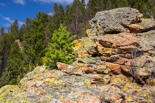 trees summer rock canon montana rocks basin evergreen evergreentrees 60d