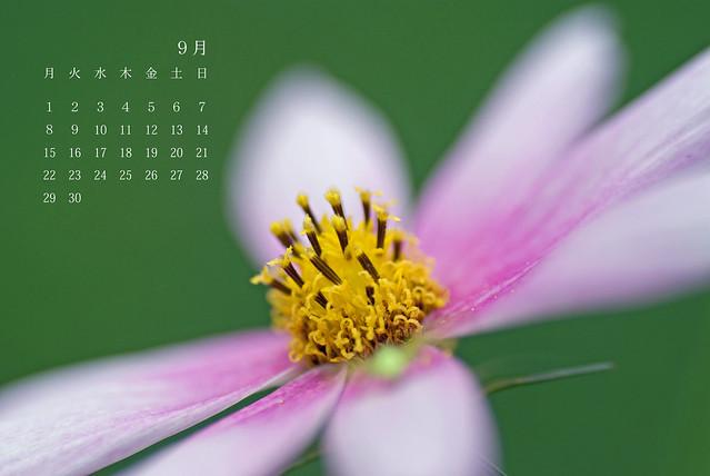写真_9月カレンダー