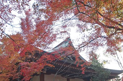 【写真】2013 紅葉 : 上御霊神社/2020-07-01/IMGP4174