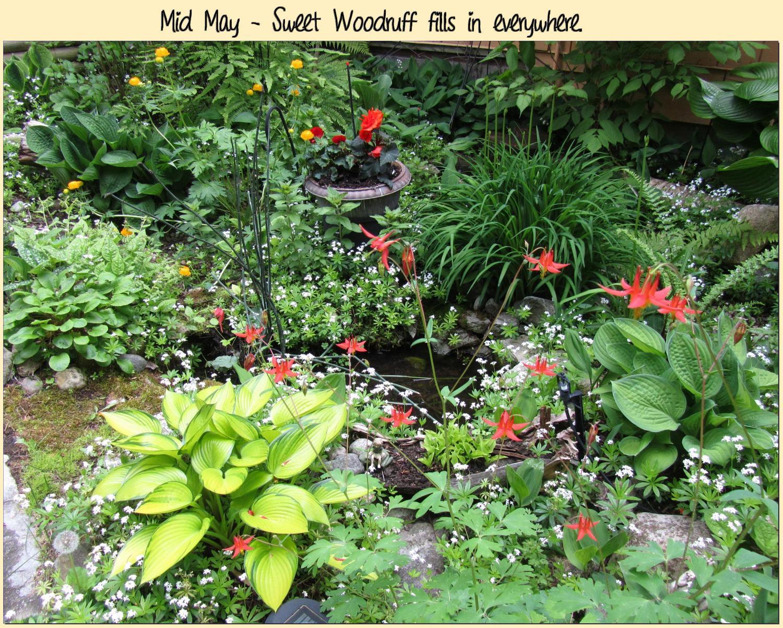 Mid May