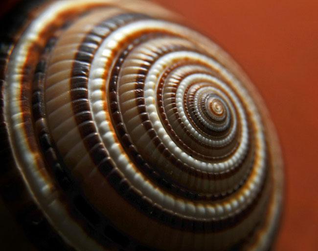nature-patterns-016