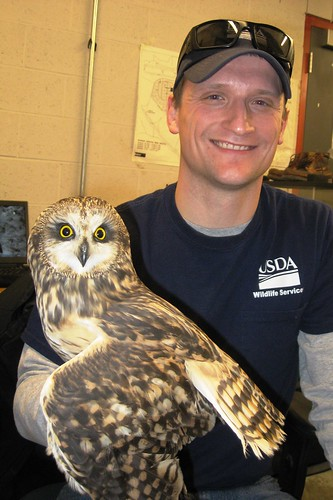 USDA airport biologist Bobby Hromack holds his first captured short-eared owl. Although it weighs no more than 16.8 ounces, the species can pose an aviation safety hazard due to its 33-43 inch wingspan and low, rolling flight style.