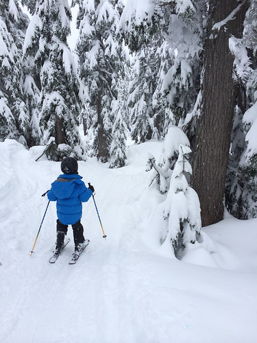 Skiing on a trail through the trees with Scott