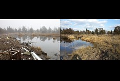 Before and after debris removal at Forsythe National Wildlife Refuge in New Jersey. Nearly 1,900 tons of debris left behind by Hurricane Sandy have been removed from the 47,000 acre refuge.