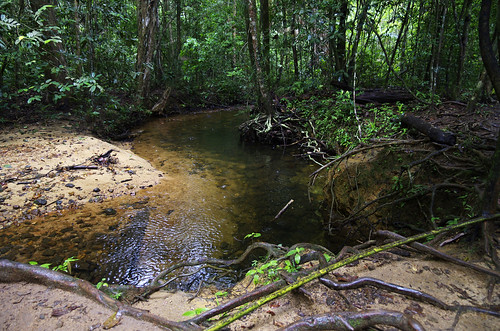 vacation forest nationalpark stream december january deep reserve sri lanka srilanka ceylon sinharaja sinharajaforestreserve
