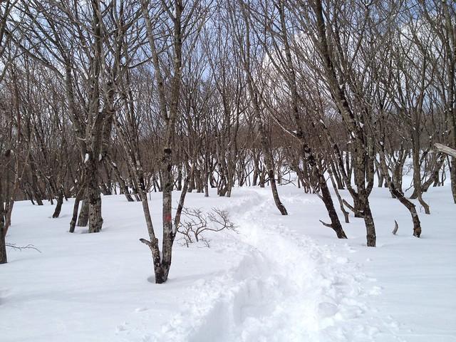 藤原岳から天狗岩へ 登山道