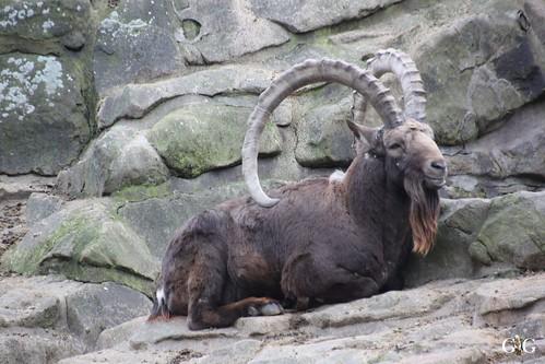 Sonntags Besuch im Zoo Berlin 25.01.2015 66