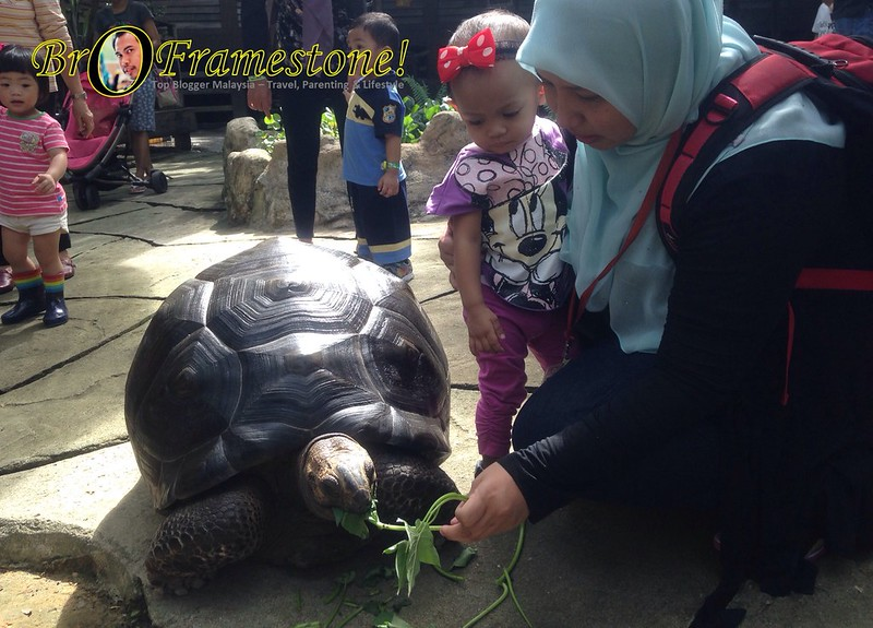 Kura-Kura Gergasi Farm in The City, Seri Kembangan - Kelab Blogger Ben Ashaari