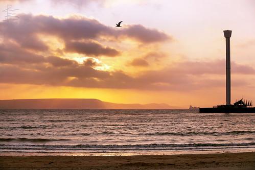 morning sea bird beach silhouette sunrise bay early seaside seagull fresh dorset weymouth newday canon1740mm theearlybird canon5dmarkii richardbeech
