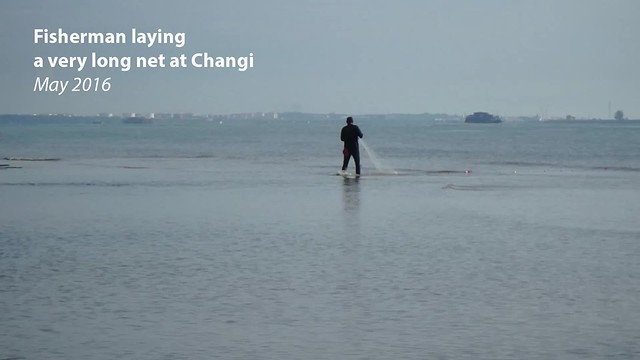 Laying a long net at Changi, May 2016