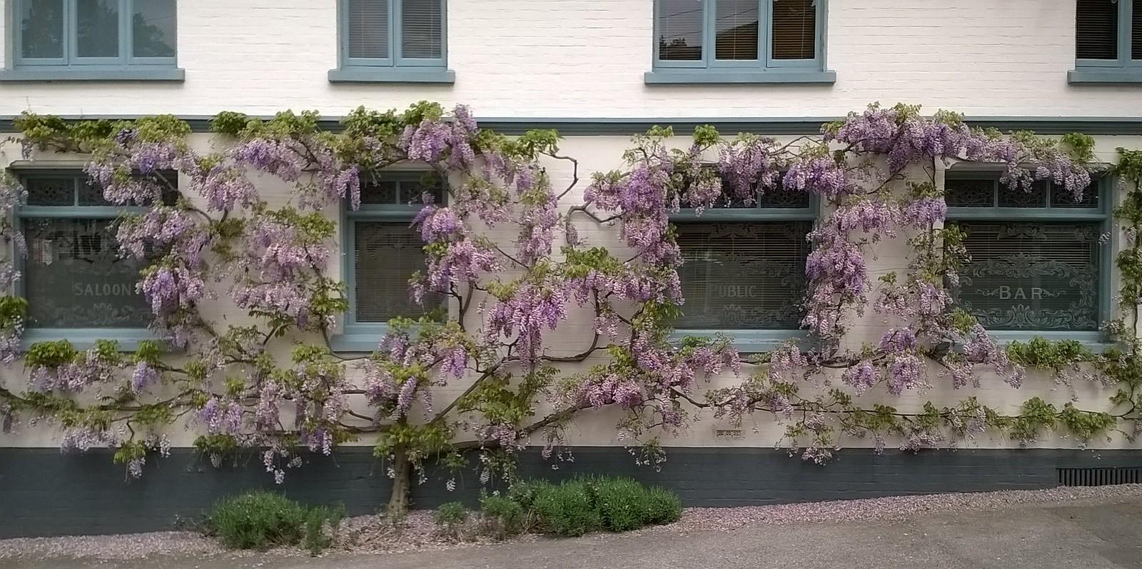 Pub festooned with flora Yalding