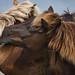 Shackleford Banks, NC - Wild horse fight by Matt Cuda - www.mattcuda.com