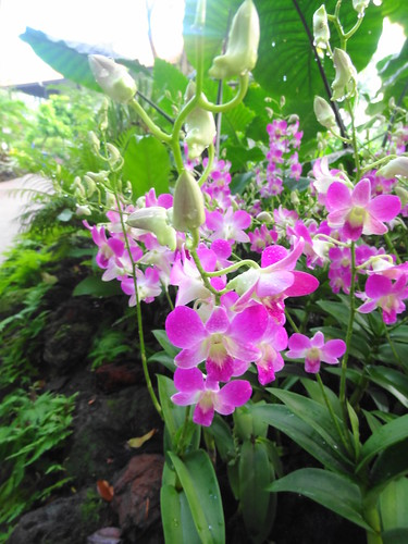 National Orchid Garden@Singapore