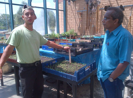 Windy City Harvest Graduate Aaron Serrano shows NIFA National Program Leader Siva Sureshwaran seedlings in the Daley City College greenhouse. (Photo: Alexandra Wilson)