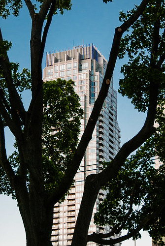 North Toronto trees versus the skyscrapers - #146/365 by PJMixer
