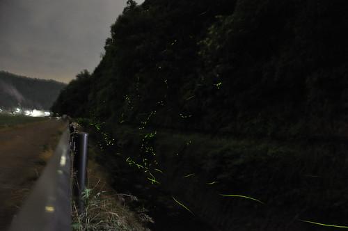 河和田のホタル