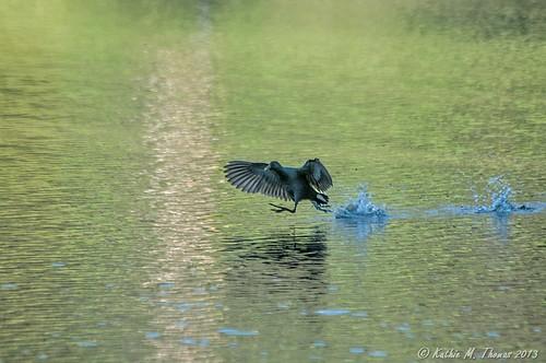 Skipping across water