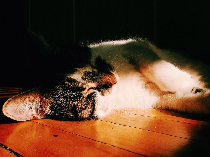 sunny nap