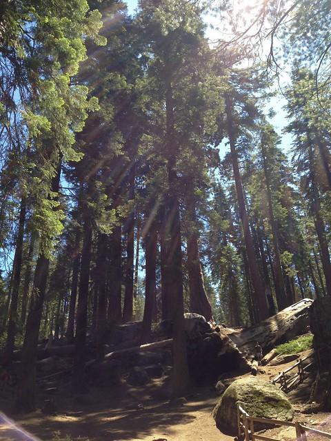 Trees_LensFlare