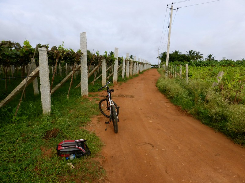 Cycling to Nandi Hills - Orchards of grapes and banana