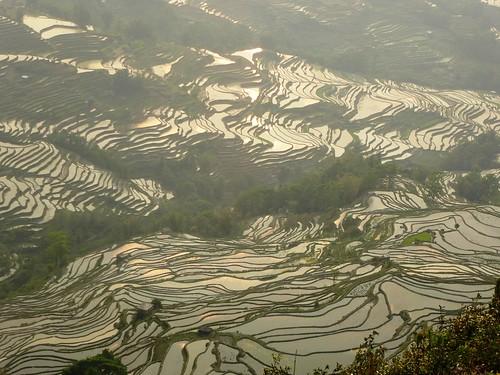 Yunnan13-Yuanyang 24-Bada (26)