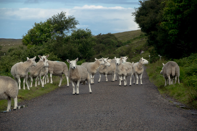Scottish Traffic Jam