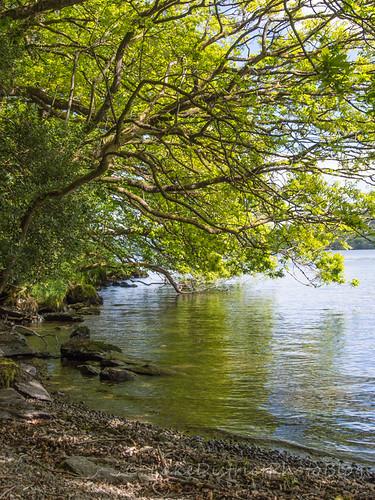 ウィンダミア湖畔、夏の風景