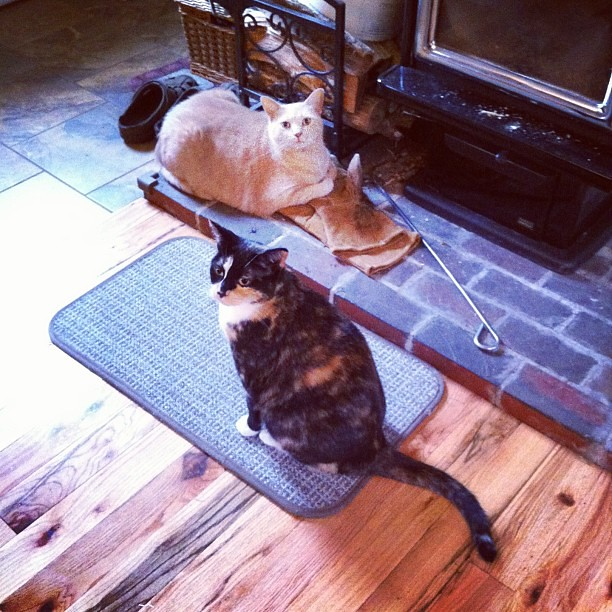 The cats are getting used to the farmhouse, I think. @oliviaebradstreet's photo is better.