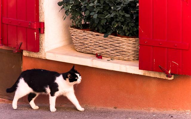 Le chat de Roussillon